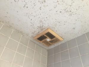 浴室の天井のカビ