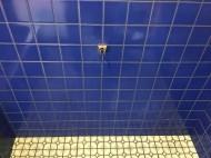 クリーニングした浴室タイル壁面
